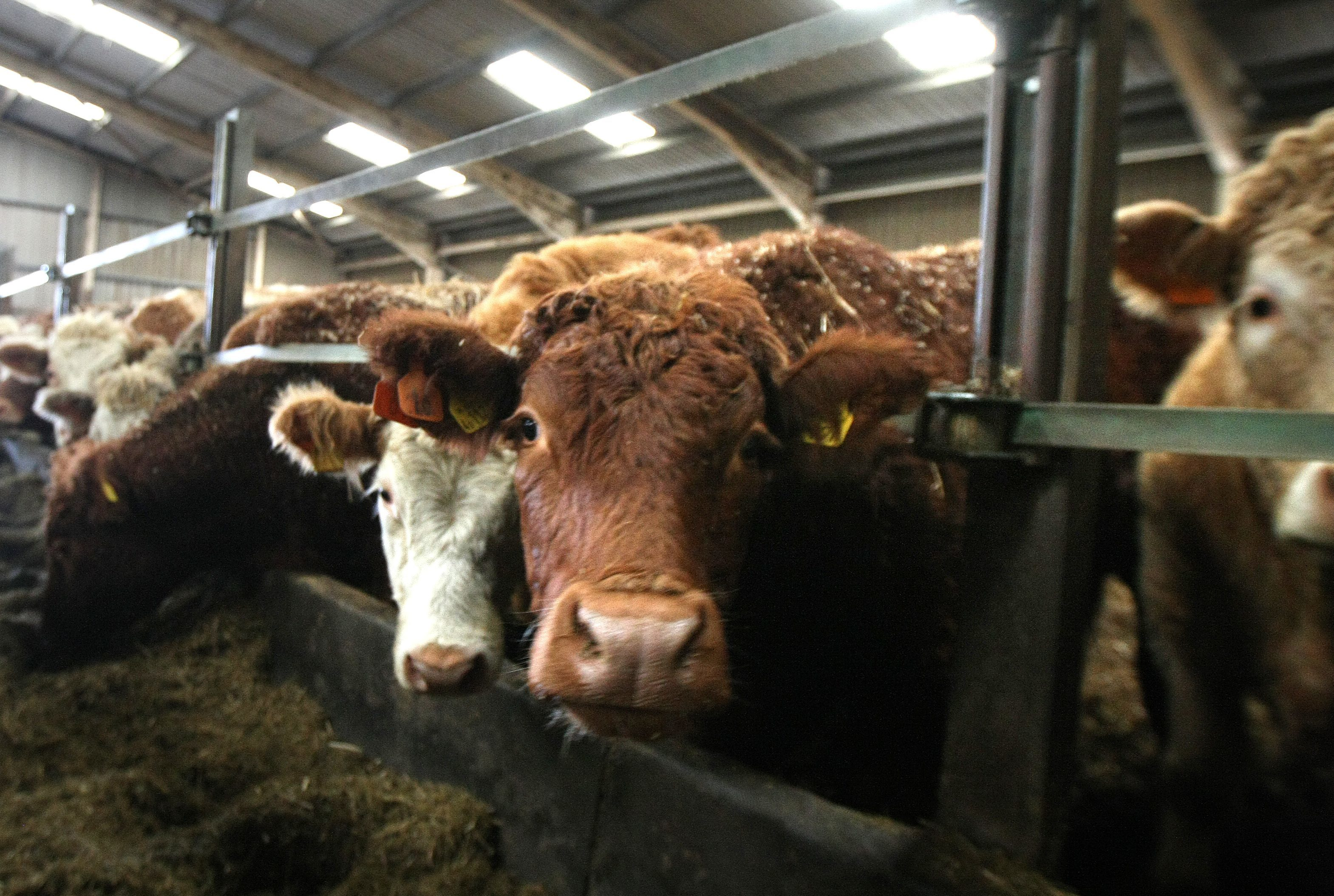 Non-compliant herds risk infecting other herds