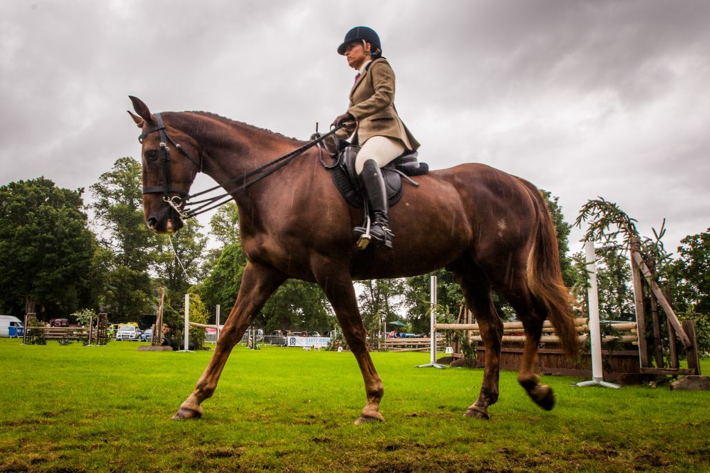 Scenes from the equestrian events at Perth Show.