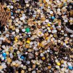 Nurdle environmental menace spotted on Forth coastline