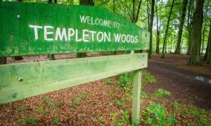 Man accused of attempted murder at Templeton Woods committed to trial
