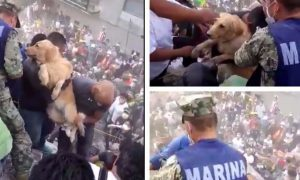 VIDEO: Touching moment Mexican rescuers save dog from rubble of deadly earthquake