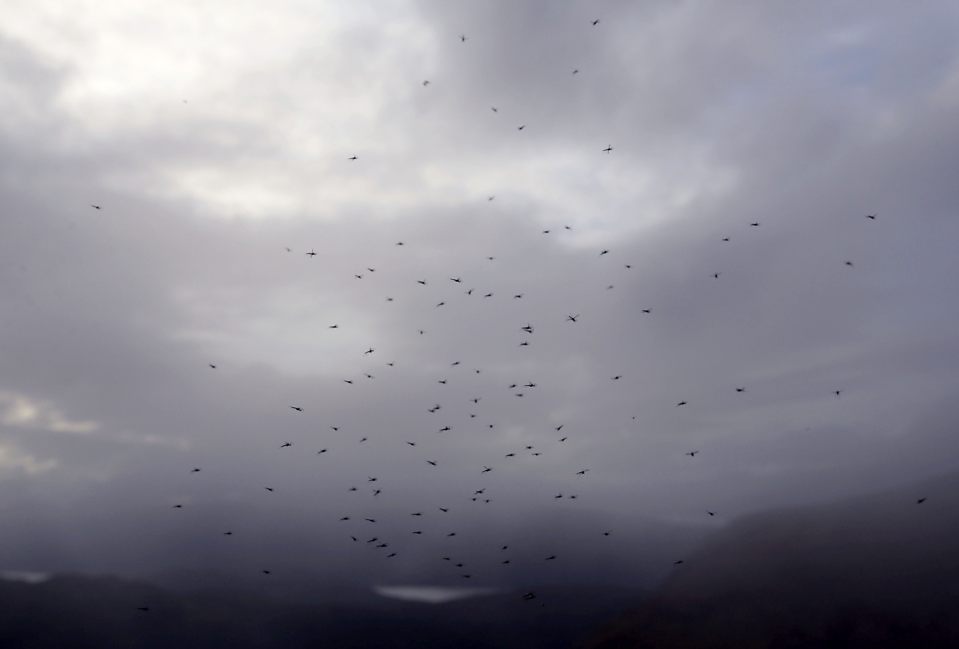 Midges hovering around a path on Ben Nevis.