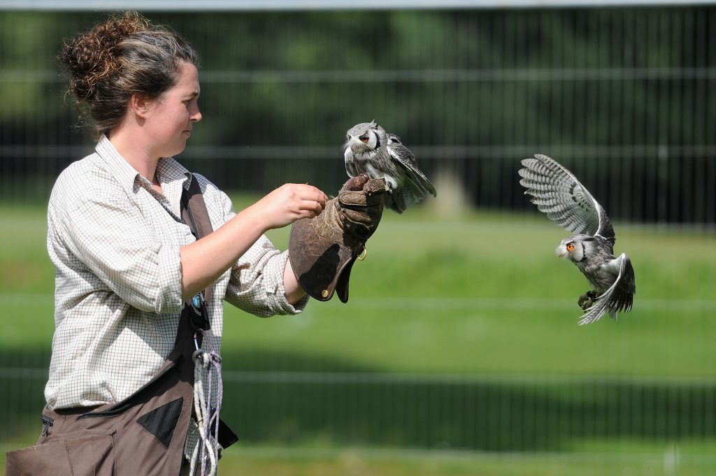 The Elite Falconry display