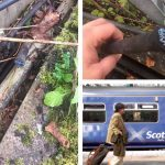 More than 30 journeys cancelled as thieves spark rail chaos