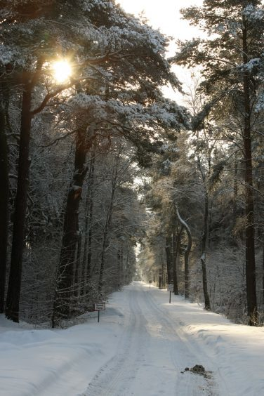 The drive into Ladybank Golf Club in December 2010.
