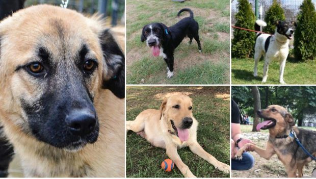 The dogs in need of homes: Eddie, Charlie, Nadia, Cicio and Amor.