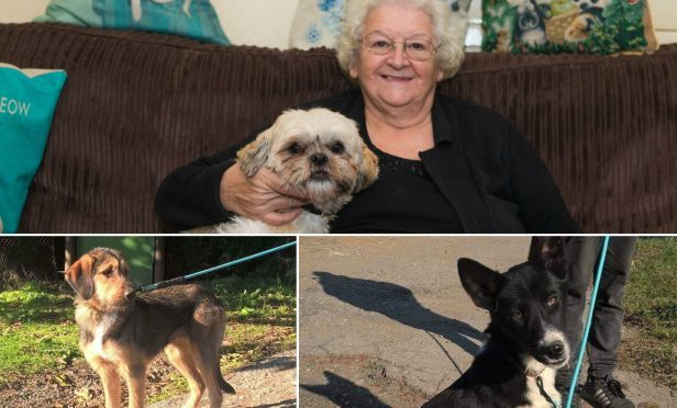 Anne-Marie Grant from Methil. Below: Lisl and Rosie the dogs.