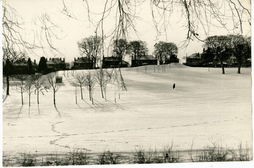 Balgay Park Under Snow. January 13, 1987.