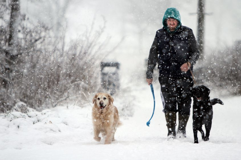 Andrew McLauchlan walking his dogs Maddie and Holmes in the heavy snow.