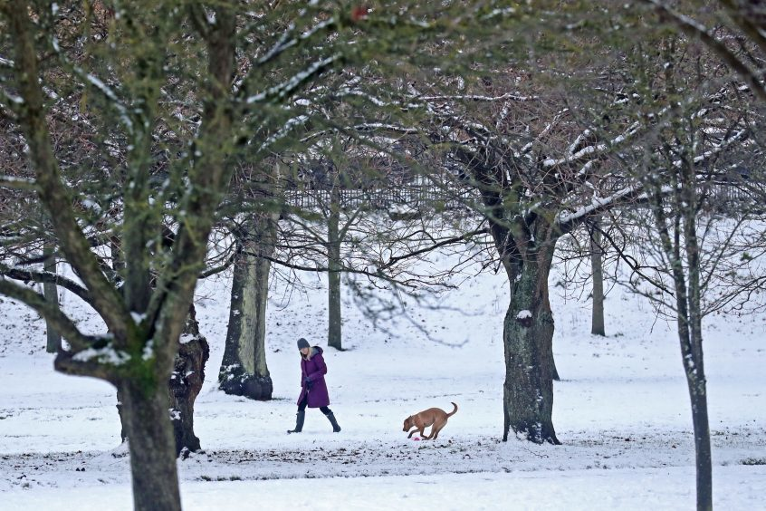 A women and her dog walking through a snowy Kelvingrove Park in Glasgow.