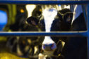 The UK Government believes compulsory milk contracts will provide greater security for dairy farmers.