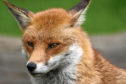 Jim has an idea to highlight the plight of the red fox across the UK: An eight-hour, prime-time series called Red Planet.