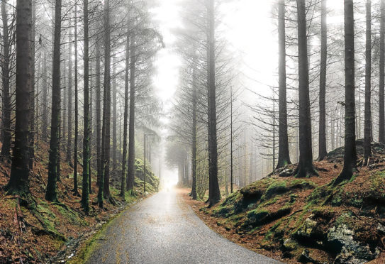 A photo of a forest road going thorough a forest in Bergen, Norway. A person on a bicycle is driving far in the dust. Atmosphere of magic and mystery.