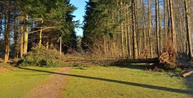 Pic of fallen tree near Perth Crematorium.