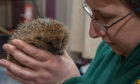 Nadia Al-Dujaili, 33, had to bring all her rescued hedgehogs into the house after flooding in Park Road swamped her garden.