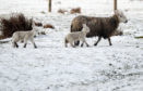 The prolonged  severe weather resulted in higher numbers of dead animals and acute shortages in fodder.