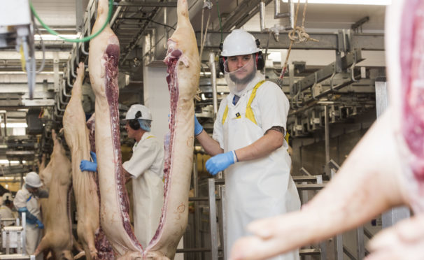 Processing carcases in a slaughterhouse. It is estimated that 95% of vets who care for animal welfare in slaughterhouses are from overseas.