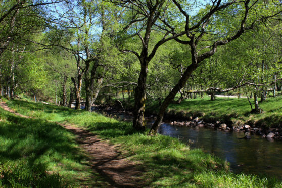 Woodland path running by River South Esk.