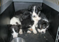 """Ms Grahame hopes to tackle """"the horrors and misery"""" of puppy farms."""
