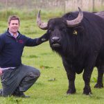 Fife buffalo farmer Steven puts the beef into food business