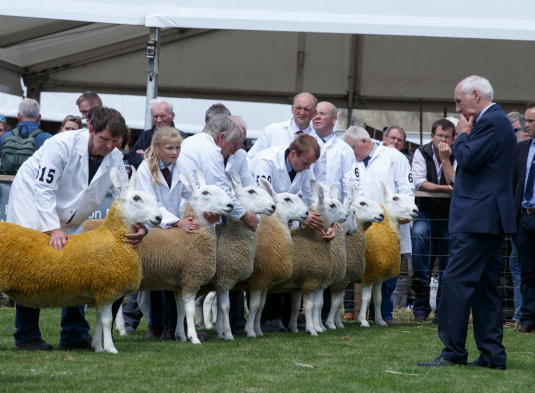 Border Leicester sheep on show for the judges.