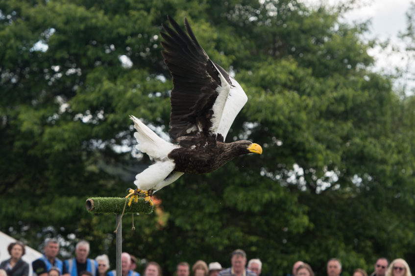 A bird of prey display at the show.