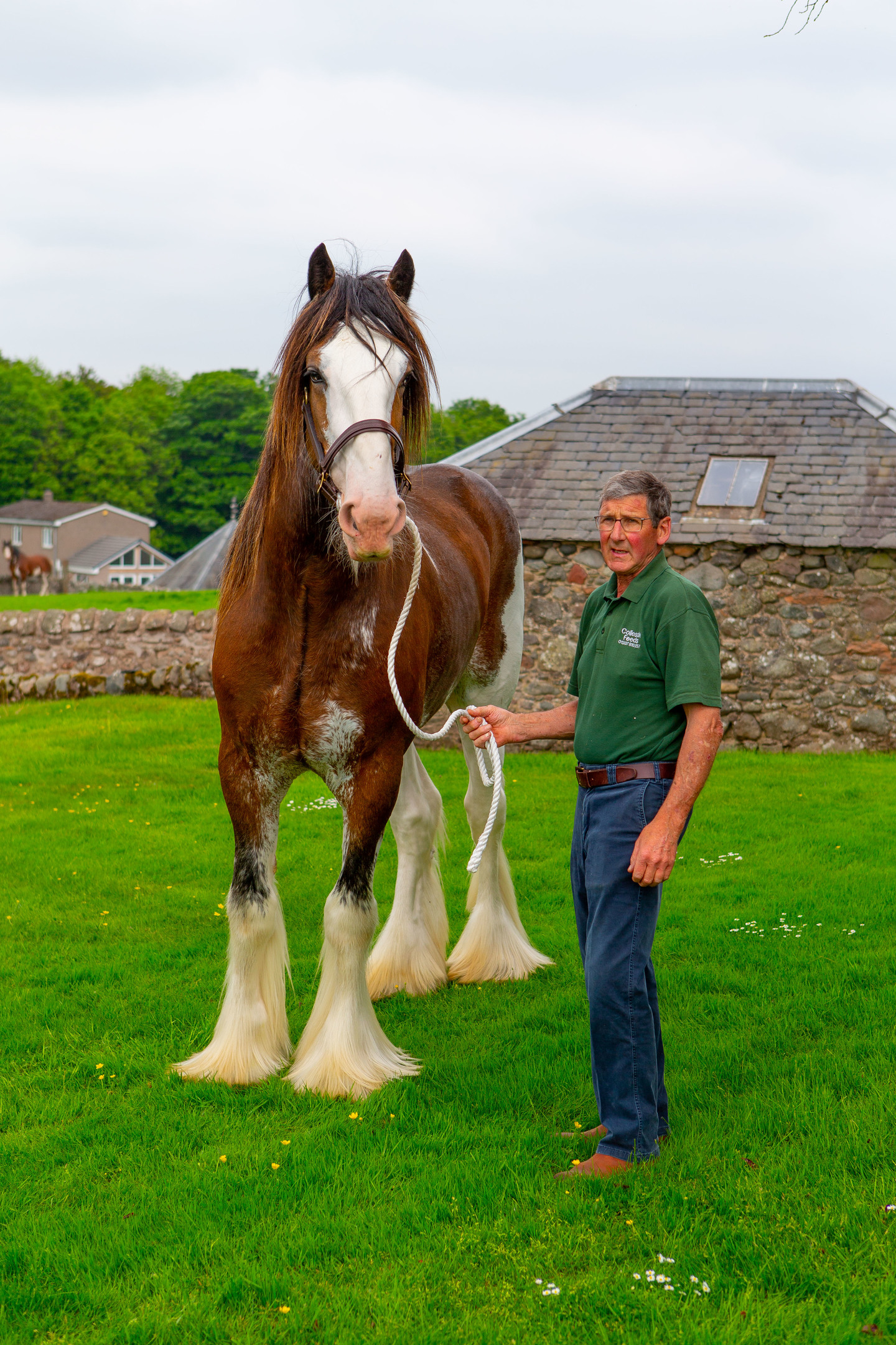 Gentle Giants Of The Horse World The Courier