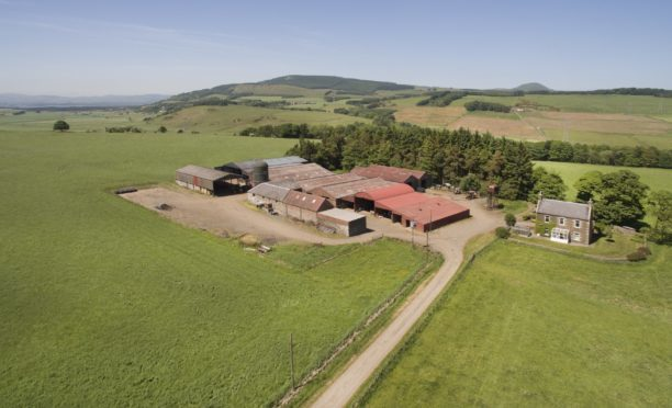 The farming system at Auchmuir is a mix of arable and livestock.
