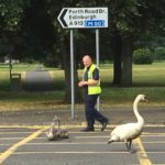 Moment Perth swan family are led to safety on the Tay after heatwave scare