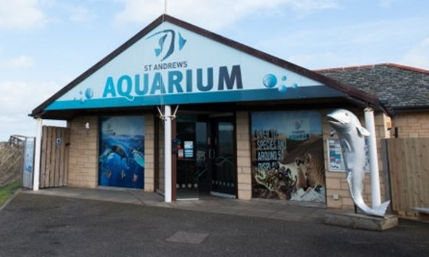 Big Mac, seen on the right, went missing from his usual spot outside St Andrews Aquarium.