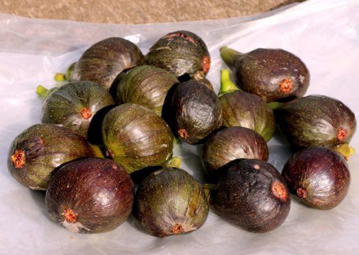 A good days picking of figs