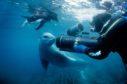 Doug Allan meets a leopard seal