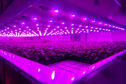 The new vertical farming facility at the James Hutton Institute. The project and others at the Invergowrie research hub has been pledged millions in support