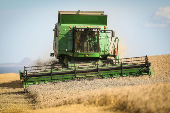 A sample area of  the field of Zulu wheat at Banchory Farm  near Kirkcaldy has been harvested  and weighed.