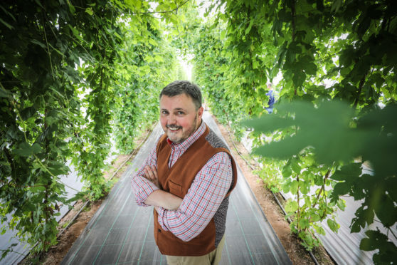 Hops have been grown as far north as Aberdeen but they remain a rare crop in Scotland.