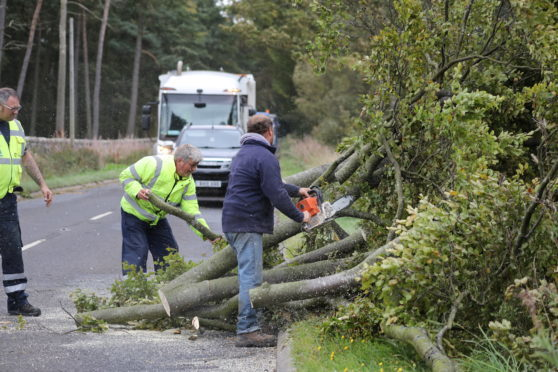 Trees being cleared near Carnoustie.