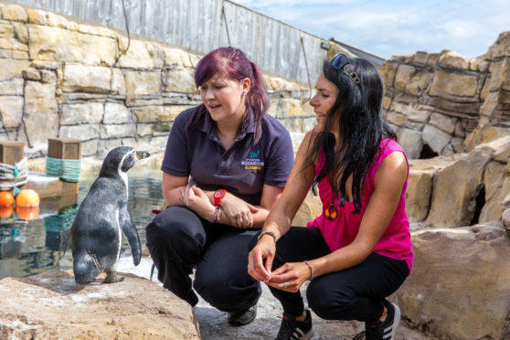 Gayle Ritchie with zookeeper Eleanor Ballantyne in the penguin enclosure at St Andrews Aquarium.