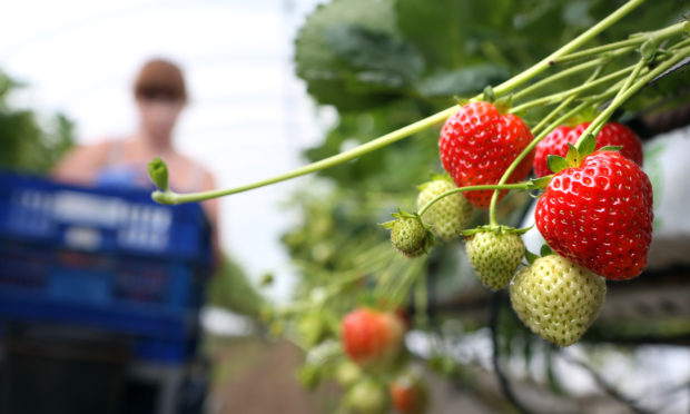 Councillors were warned the soft fruit industry would be hardest hit.