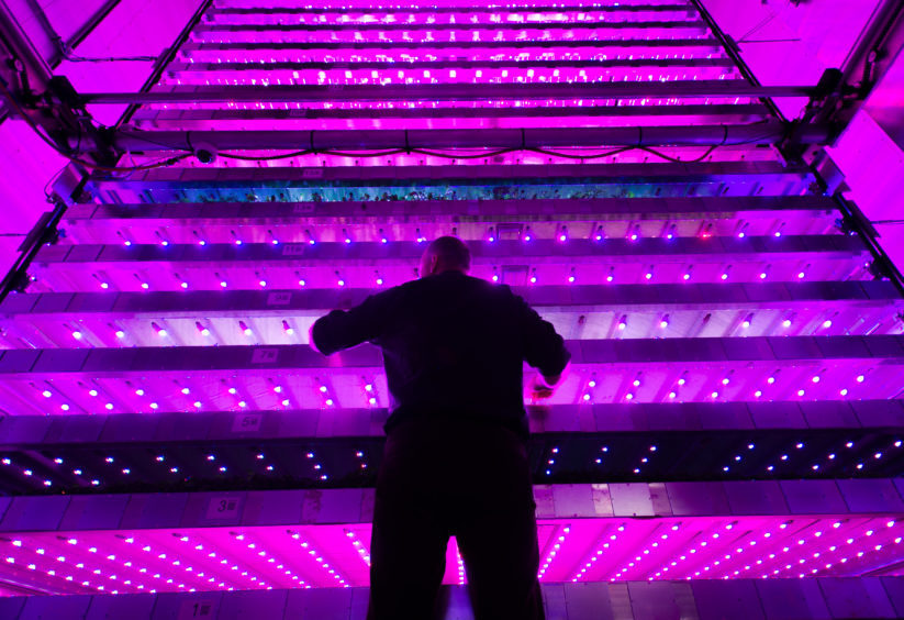 The official opening of the new vertical farming facility at James Hutton Institute.  One of the development team members, Neil Skinner checks on the lighting,