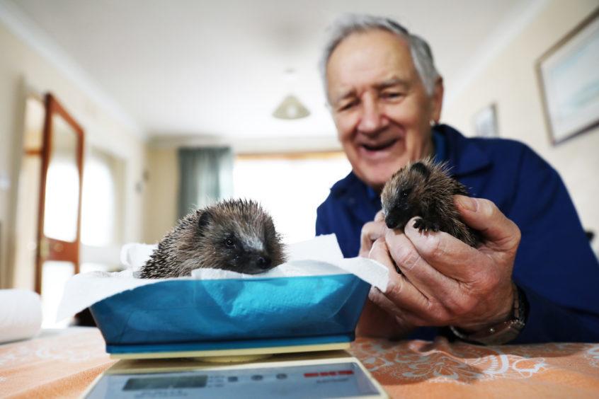 Sandy Boyd dedicates his time to saving hedgehogs.