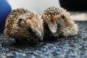 The Wormit centre's newest tiny twosome.