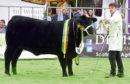 The Black Beauty Bonanza yearling heifer champion from Donald Rankin.