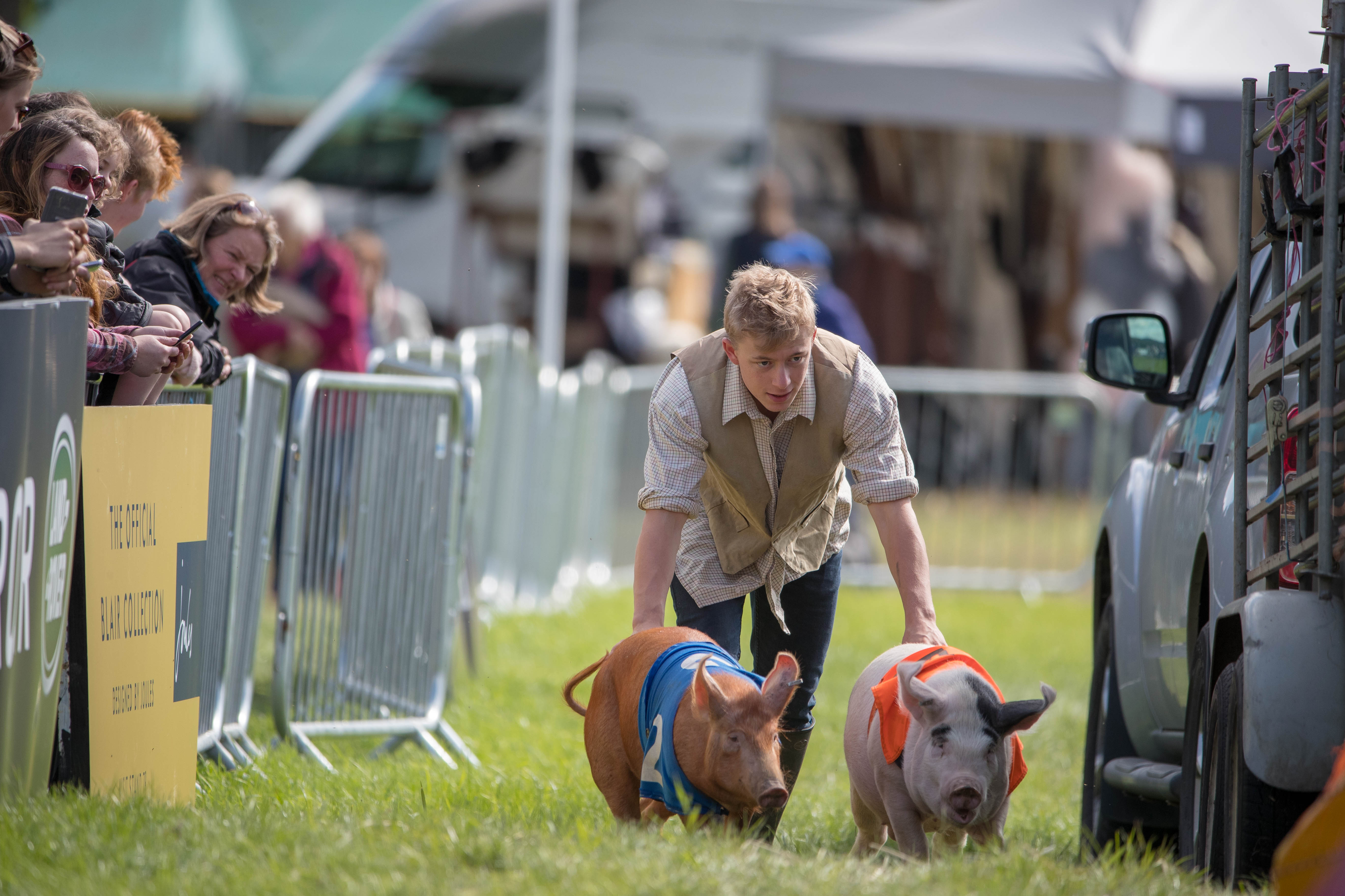 Hogging the limelight - pig racing in Perthshire - The Courier