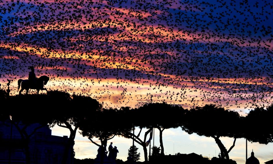 A swarm of starlings flies over the Altare della Patria monument in the city centre of Rome. Vincenzo Pinto / Getty Images