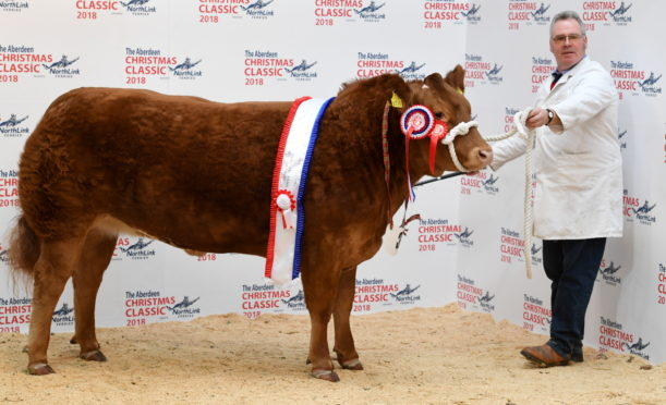 Cheeky Kiss from Wilson Peters won the overall championship and sold for £4,600.