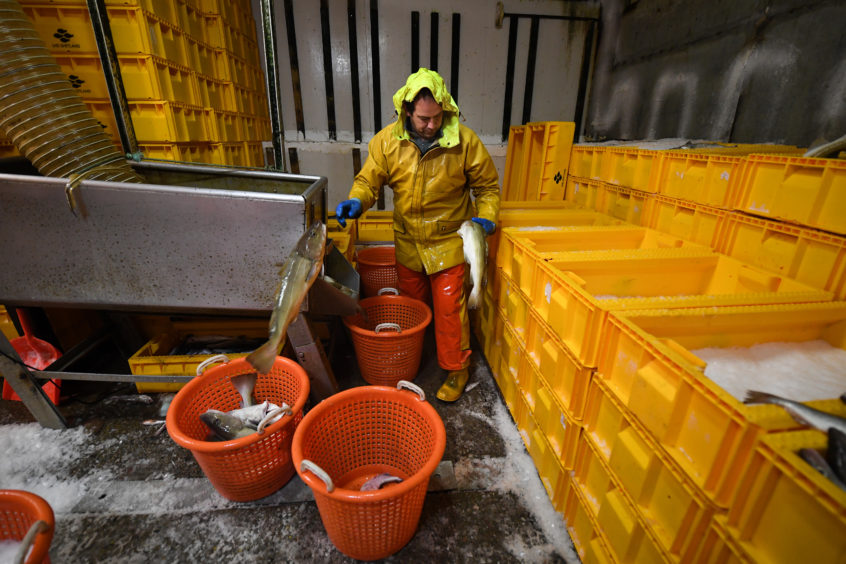 Preparing and storing the catch below.