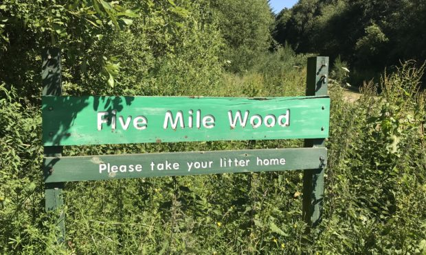 Five Mile Wood near Stanley