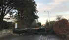 the tree has block the road