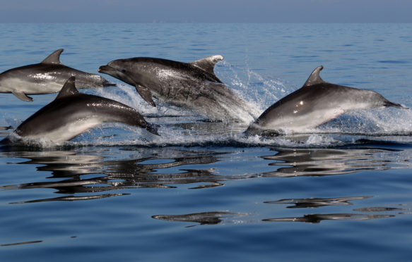 the dolphins have been studied for more than 16 years