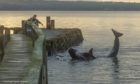 The pod of whales were stranded at Culross. Photo by Graham Harris Graham of Town House gallery, Culross.